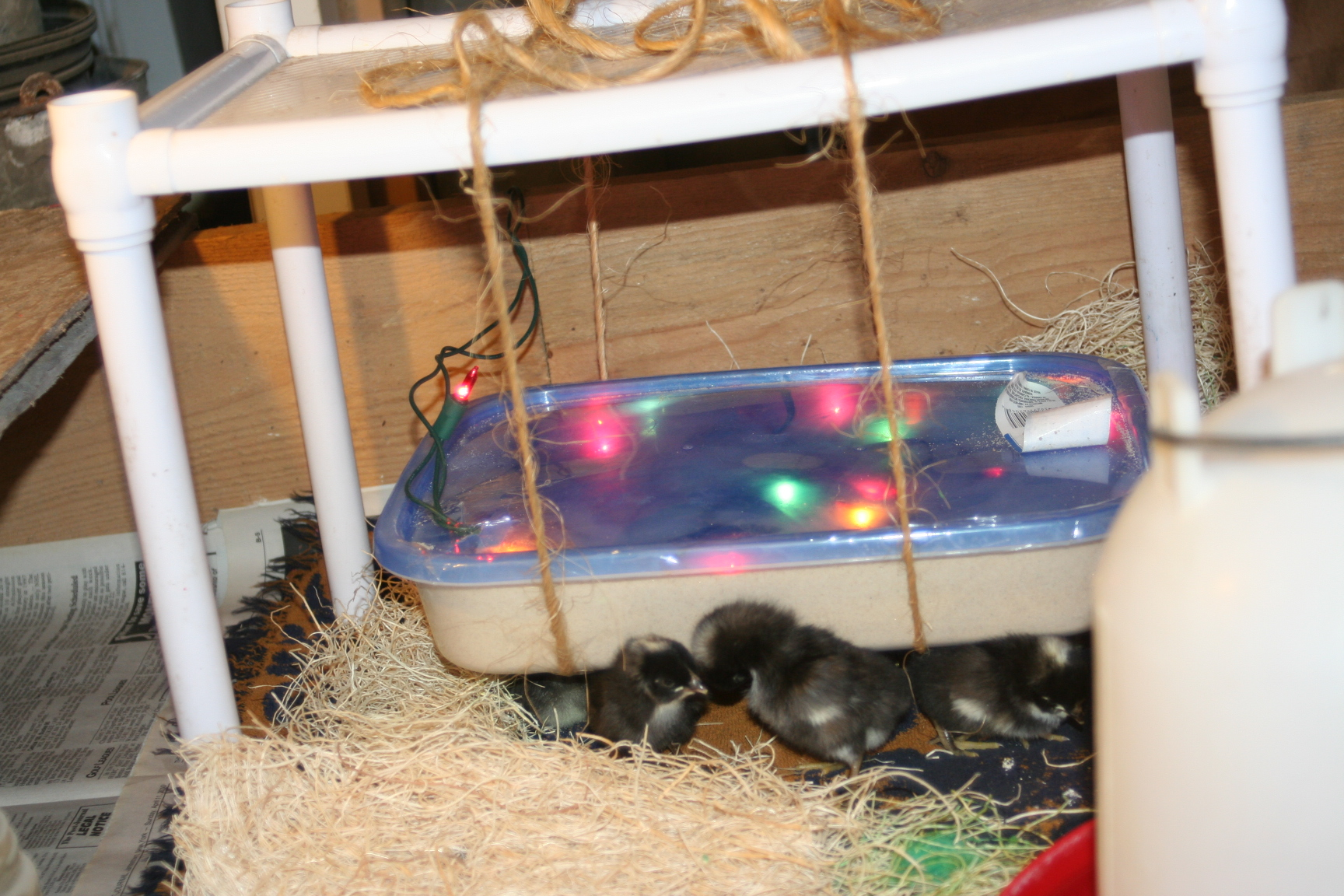 Homemade diy version of an ecoglow style brooder pure for Homemade diy